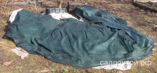 Укрытие растений на зиму. Притеняющая сетка вместо лапника. садпочтой.рф